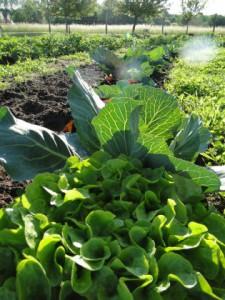 Link zu das Gemüse